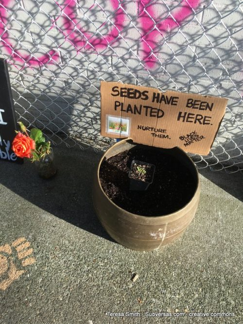 """""""Seeds have been planted here"""" sign in garden pot, challenging the temporariness of this TAZ"""